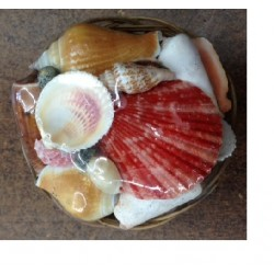 Sea Shell Basket (S Size)